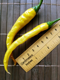 fruit of chilli pepper: Cayenne Pepper Golden