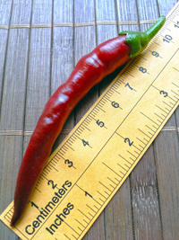 fruit of chilli pepper: Cayenne Pepper Purple Long